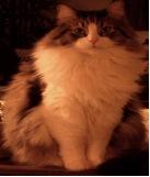 chris_cat