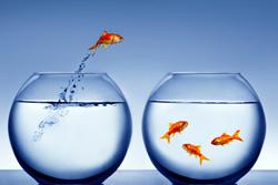 learning goldfish